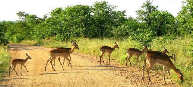 kruger national park Afrique du Sud